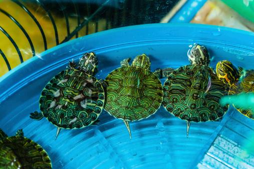 Teenage Mutant Ninja Turtles Affect Treatment Of Pet Turtles Malibu Based Tortoise Rescue Organization Speaks Up Century City News